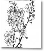 Cherry Blossems Metal Print by Christy Beckwith