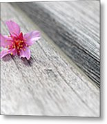 Cherry Blossom On Bench Metal Print by Lisa Phillips