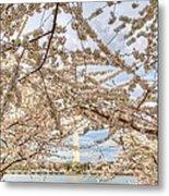 Cherry Blossoms Washington Dc 3 Metal Print by Metro DC Photography