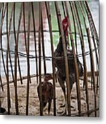 Chickens In Bamboo Cage Metal Print by David Buffington