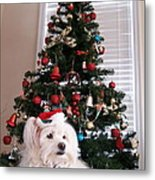 Christmas Card Dog Metal Print by Vijay Sharon Govender