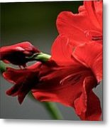 Chromatic Gladiola Metal Print by Deborah  Crew-Johnson