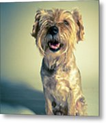 Cleveland Dog Metal Print by Square Dog Photography