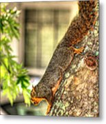 Climbing Down Metal Print by Ester  Rogers