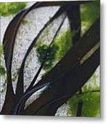 Close-up Of Seaweed In Water Metal Print by Axiom Photographic