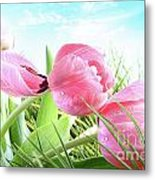 Close-up Of  Spring Tulips  Metal Print by Sandra Cunningham