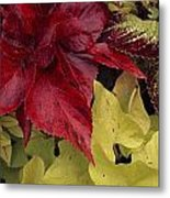 Coleus And Other Plants In A Window Box Metal Print by Paul Damien