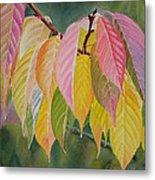 Colorful Fall Leaves Metal Print by Sharon Freeman