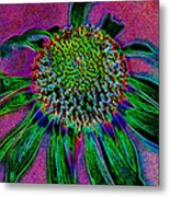 Coneflower Metal Print by Simone Hester