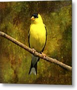 Contemplating Goldfinch Metal Print by J Larry Walker