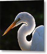 Contemplative Egret Metal Print by Andres Leon