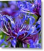 Cornflower Color Metal Print by Byron Varvarigos