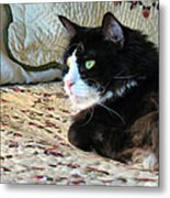 Country Kitty Metal Print by Michelle Milano