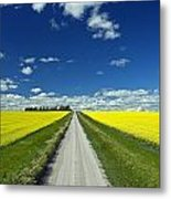 Country Road With Blooming Canola Metal Print by Dave Reede