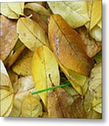 Covering The Green Metal Print by Trish Hale