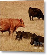 Cows Metal Print by Methune Hively