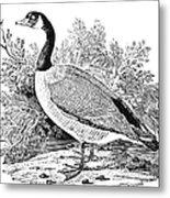 Cravat Goose Metal Print by Granger