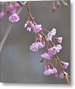 Crepe Myrtle Metal Print by Lisa Phillips
