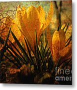 Crocus In Spring Bloom Metal Print by Ann Powell