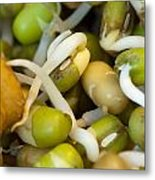 Cross Section Of Some Healthy Sprouts Metal Print by Ashish Agarwal