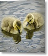 Curiosity Metal Print by Heather Applegate