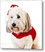 Cute Dog In Santa Outfit Metal Print by Elena Elisseeva