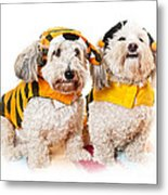 Cute Dogs In Halloween Costumes Metal Print by Elena Elisseeva