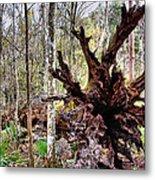 Cypress Roots Metal Print by Kristin Elmquist