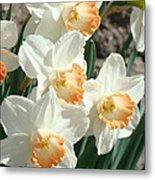 Daffodil Flowers Art Prints Spring Floral Metal Print by Baslee Troutman