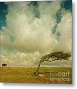 Daisy Spots A Tree Metal Print by Paul Grand