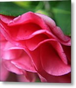 Dancing Petals Of The Camellia Metal Print by Enzie Shahmiri