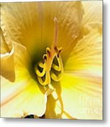 Day Lilly Macro Metal Print by Elizabeth Coats