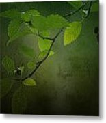 Daybreak Tiptoes In Metal Print by Bonnie Bruno