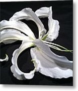 Deconstructed Lily Metal Print by Anna Villarreal Garbis