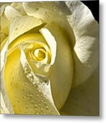 Delightful Yellow Rose With Dew Metal Print by Tracie Kaska