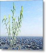 Desert Plant, Artwork Metal Print by Carl Goodman