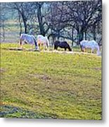 Dinner At Five Metal Print by Jan Amiss Photography