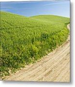 Dirt Road Through Field, Palouse, Washington Metal Print by Paul Edmondson