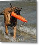 Dog 119 Metal Print by Joyce StJames