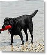 Dog 66 Metal Print by Joyce StJames