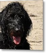 Dog 73 Metal Print by Joyce StJames