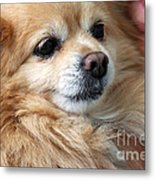 Dog First Metal Print by Charline Xia