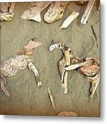Drifting Horses Metal Print by Cindy Wright