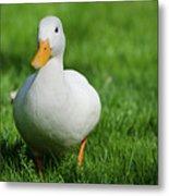 Duck On Grass Metal Print by Mats Silvan