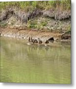 Ducks In A Row Metal Print by Corinne Elizabeth Cowherd