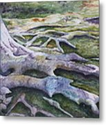 Dunbar Cave Roots  Metal Print by Patsy Sharpe