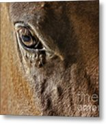 Eye Of The Horse Metal Print by Susan Candelario