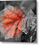 Fall Leaf Metal Print by Rick Rauzi