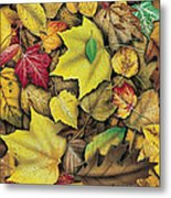Fall Leaf Study Metal Print by JQ Licensing