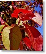 Fall Leaves Metal Print by Aliesha Fisher
